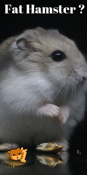 Big Fat Hamster Pin
