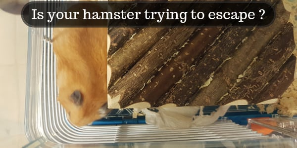 4 Reasons Your Hamster Is Trying To Escape – And What To Do