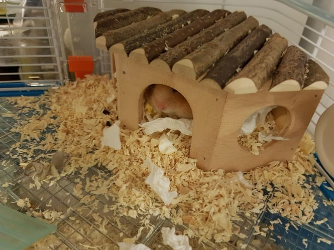 hamster bedding and hideout (3)