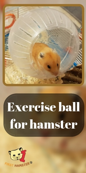 hamster exercise ball 3