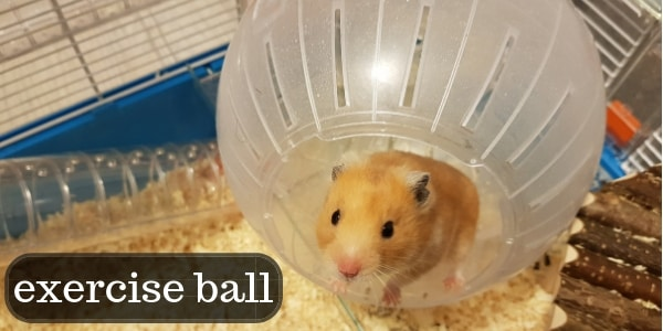Choosing An Exercise Ball For Your Hamster – Complete Guide