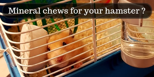 The Truth About Mineral Chews For Hamsters – And Great Alternatives