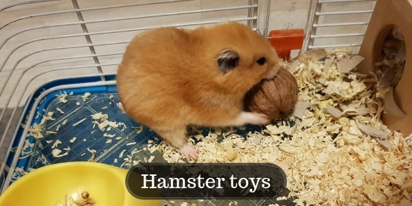Guide To Choosing Hamster Toys – DYI And Store Bought