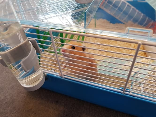 hamster water bottle
