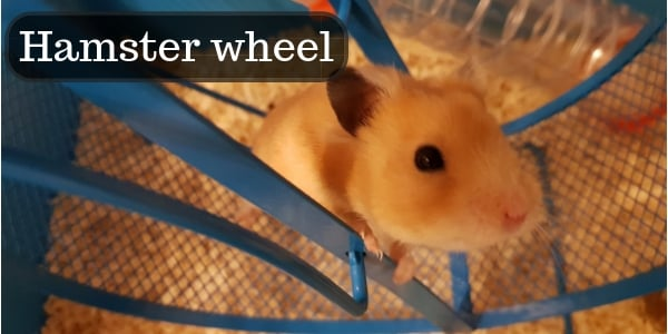 Buyer's Guide – Choosing The Best Hamster Exercise Wheel