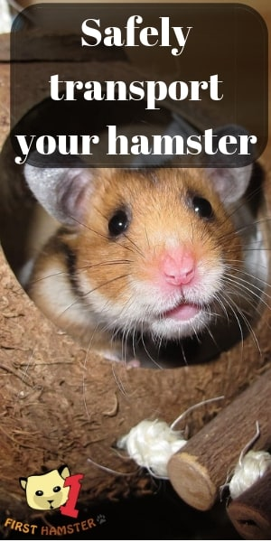 transport your hamster (2)