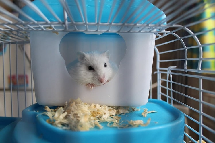 transport your hamster (4)
