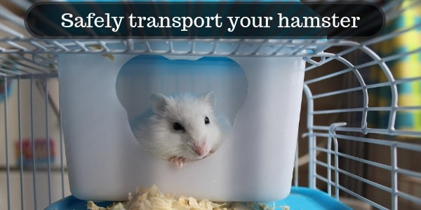 How To Safely Transport Your Hamster + Best Travel Cages