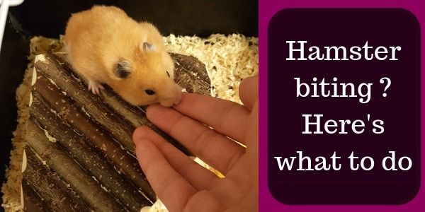 5 Reasons Your Hamster Bites And How To Stop It