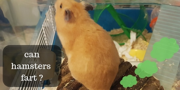 can hamsters fart (2)