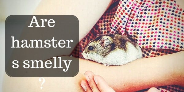 Do Hamsters Smell Bad ? Here's How To Make Sure They Don't