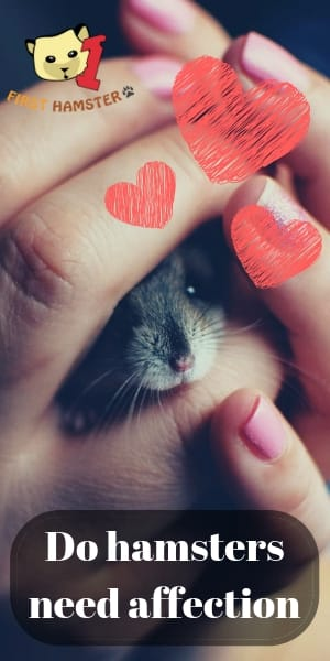 hamster affection (1)