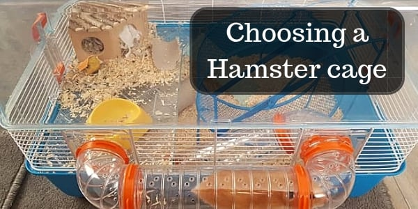 Complete Guide To Choosing Dwarf Or Syrian Hamster Cages