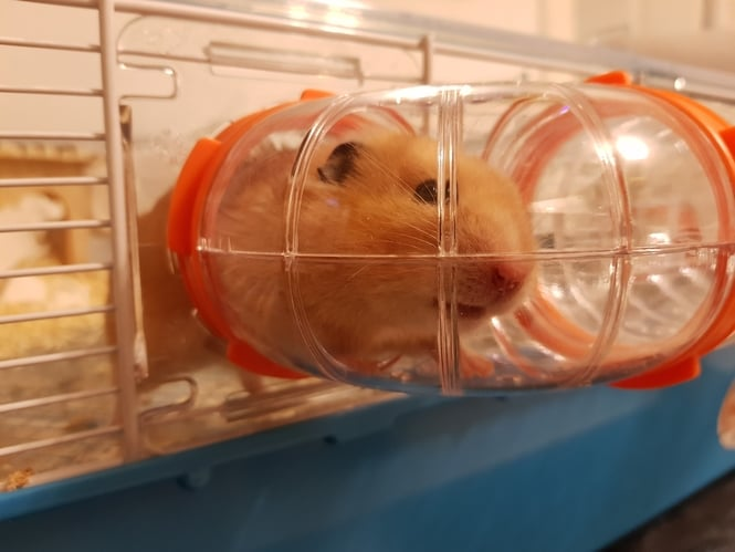 hamster cage (3)