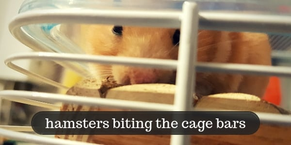 5 Reasons Hamsters Chew On Cage Bars – And How To Stop Them