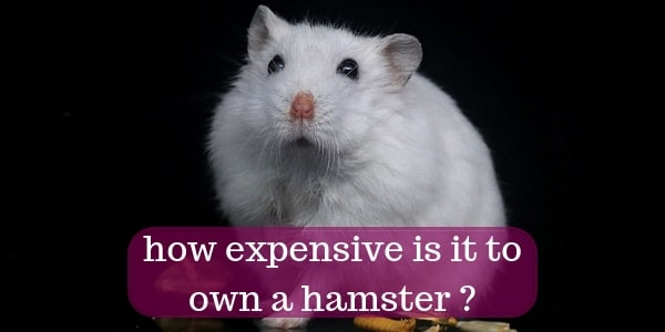 The Real Cost Of Buying And Owning A Hamster