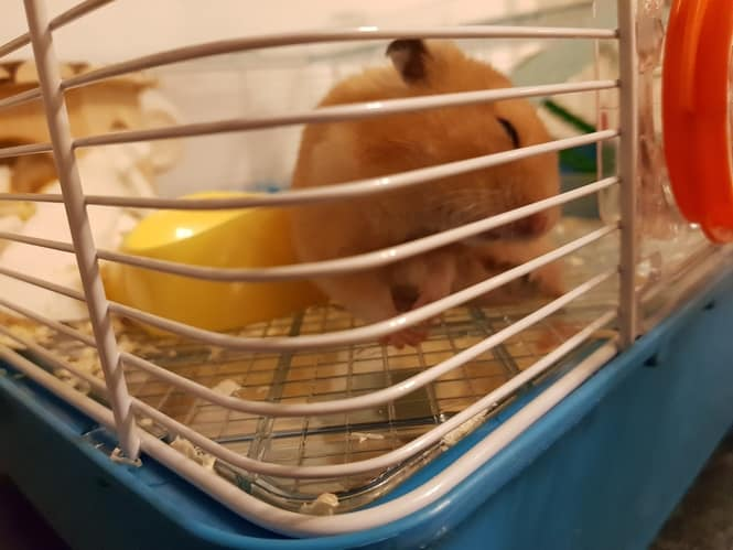 hamster funny cute (1)
