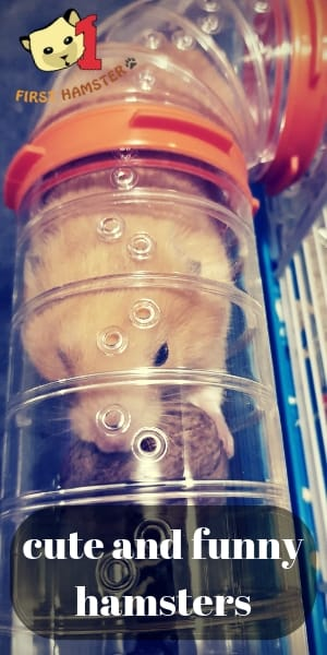 hamster funny cute (2)