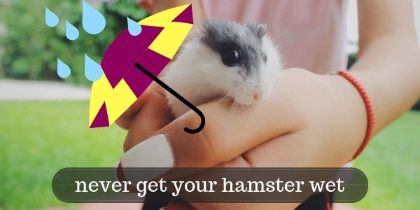 Here's Why You Should Never Get Your Hamster Wet