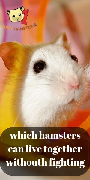 why hamsters fight (1)