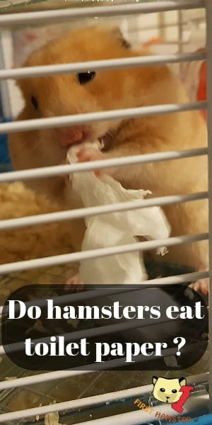 can hamsters eat toilet paper (2)