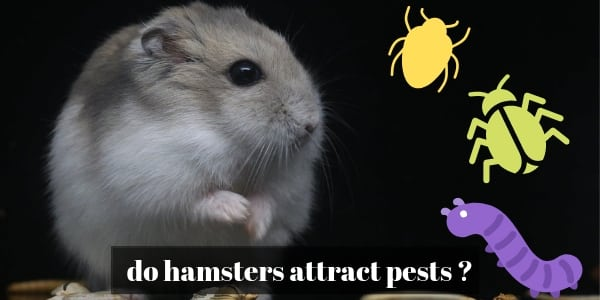 do hamsters attract mice or pests (1)