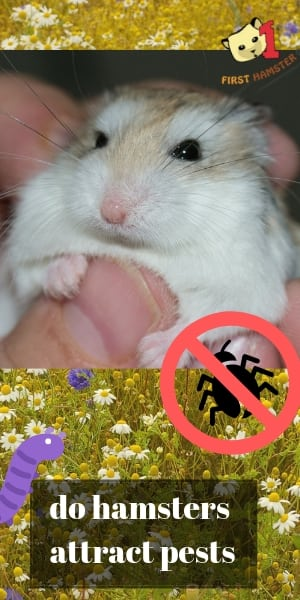 do hamsters attract mice or pests (2)