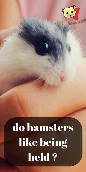 do hamsters like being held (3)