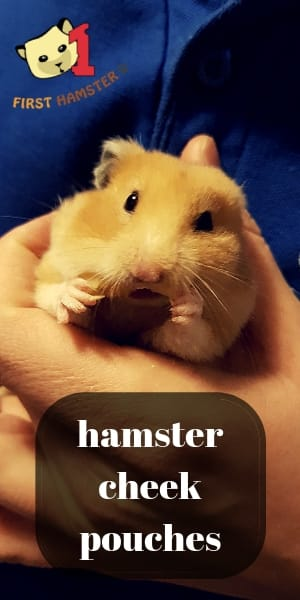 hamster cheek pouches (1)