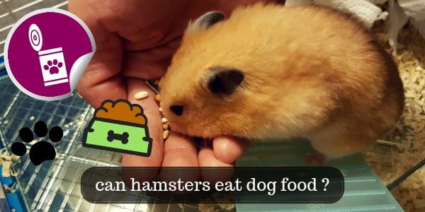 About Hamsters Eating Dog Food (Or Any Other Animal Food)