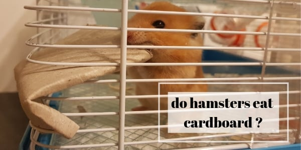 Do Hamsters Eat Cardboard ? About Your Hamster's Chew Habit