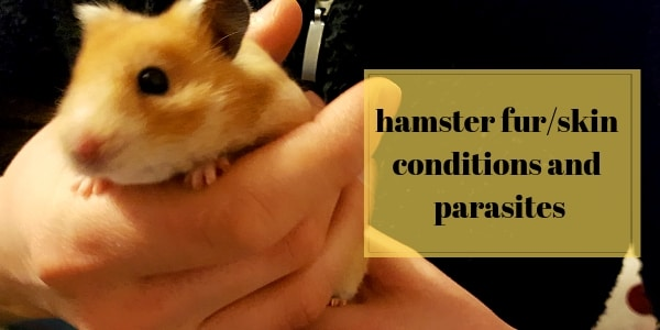 About Hamster Skin/Fur Conditions, Mites, Other Parasites
