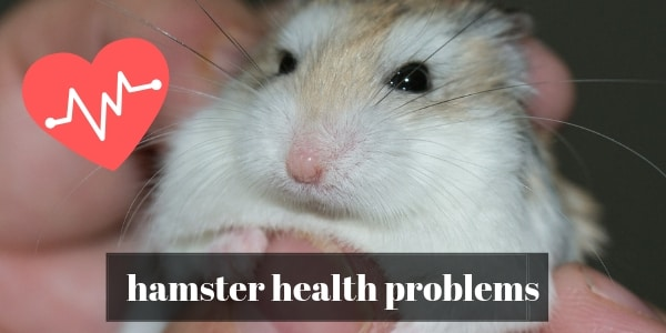 10 Common Hamster Health Problems And How To Treat Them