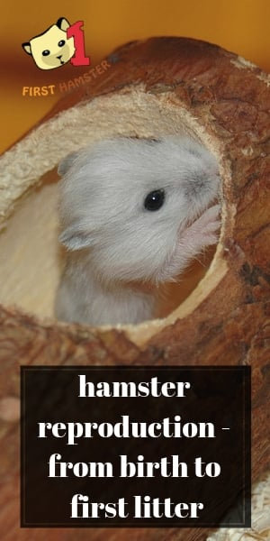 hamster reproduction (1)