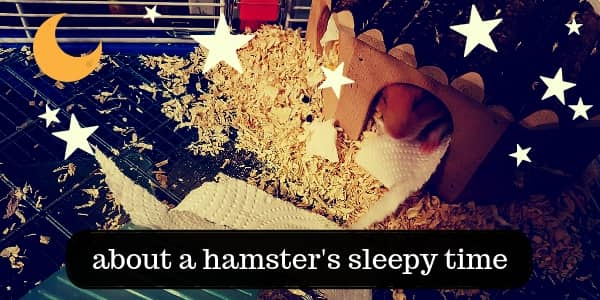 When And How Hamsters Sleep – Your Furball's Sleepy Time