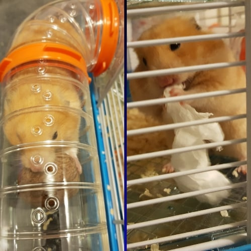 hamsters activites
