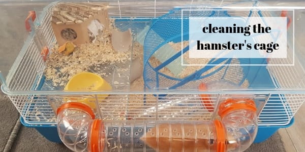 hamsters cage cleaning (1)