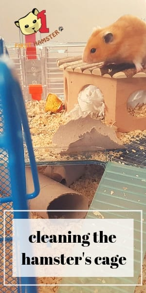 hamsters cage cleaning (2)