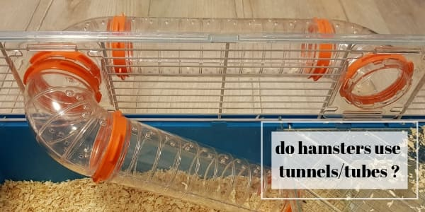 Do Hamsters Use tubes And Tunnels ? Gifts For Your Hamster