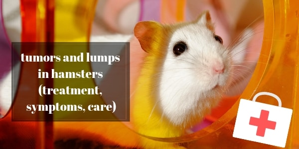 Tumors And Lumps In Hamsters – Symptoms, Treatment, And Care