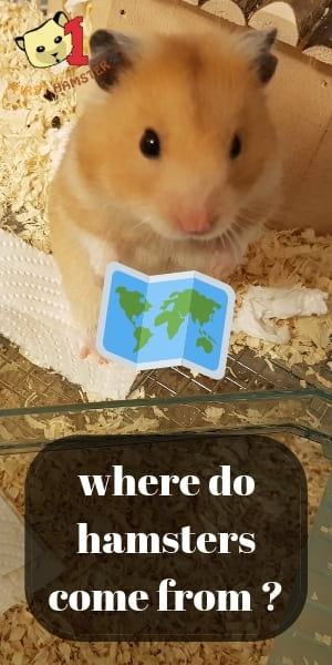 where hamsters come from (2)
