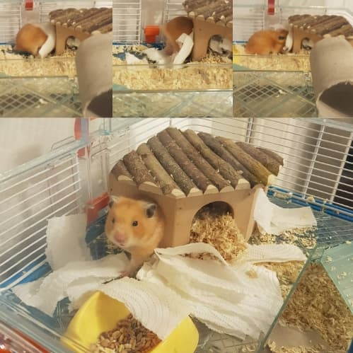 caring for your hamster (5)