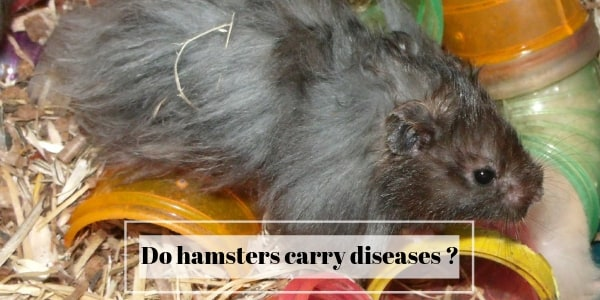do hamsters carry diseases