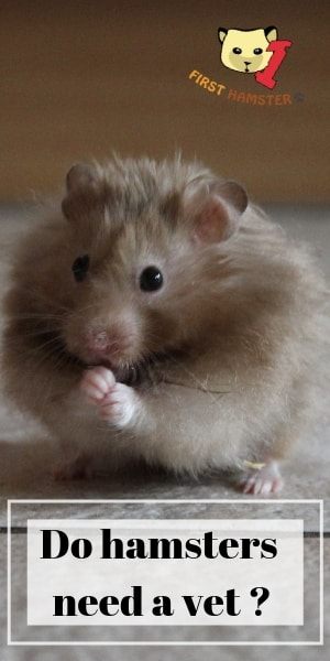 do hamsters need a vet (1)