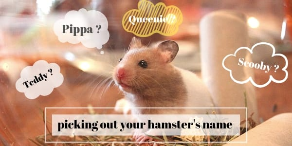195 Perfectly Cute Hamster Names (Male And Female)
