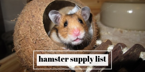 10 Things To Get For Your Hamster (Essential Supply List)