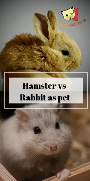 hamster vs rabbit (1)
