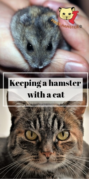 keeping hamster with cat (2)