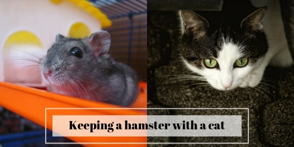 keeping hamster with cat
