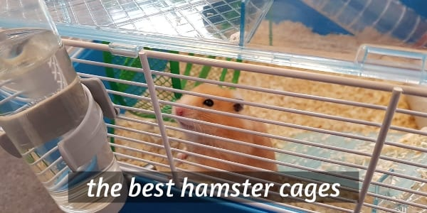 5 Best Hamster Cages For Syrian And Dwarf  (An Owner's Opinion)